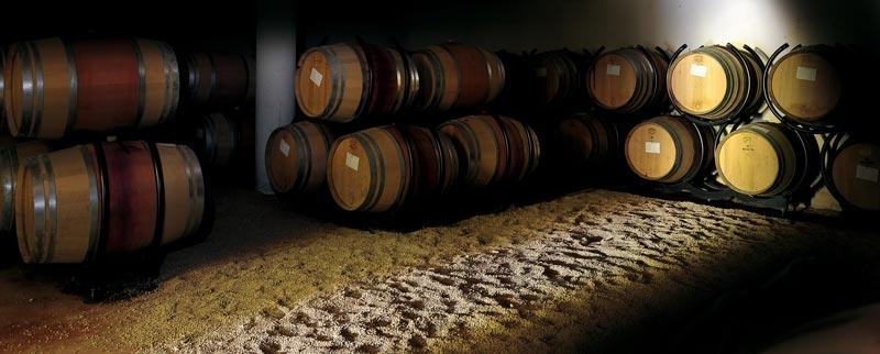 Chai d'élevage du vin